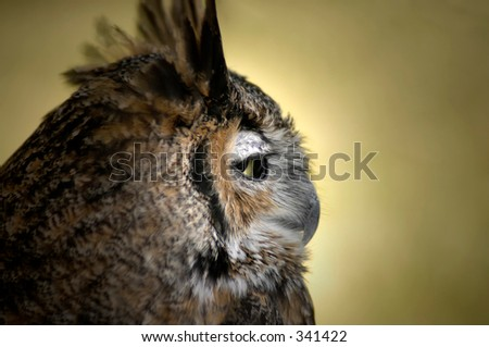 Owl profile - stock photo
