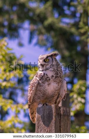 Owl sits on a log - stock photo