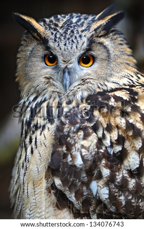 Owl sitting on a branch in the forest - stock photo