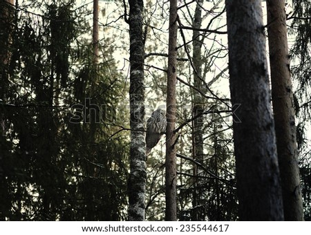 Owl sitting on the tree in the dusk forest - stock photo