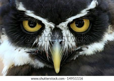 Owl up close. - stock photo