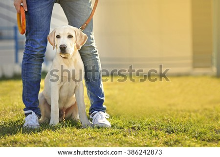 Owner and Labrador dog sitting on green grass - stock photo