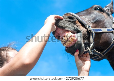Owner checking horse teeth on a blue sky background. Multicolored summertime horizontal outdoors image. - stock photo
