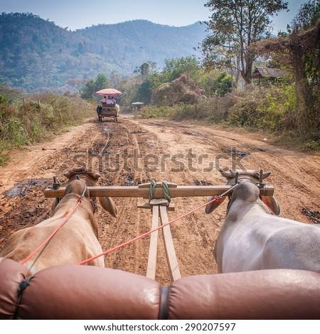 Ox cart riding - stock photo
