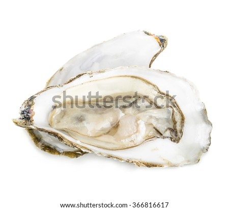 Oyster close-up isolated on a white background. - stock photo