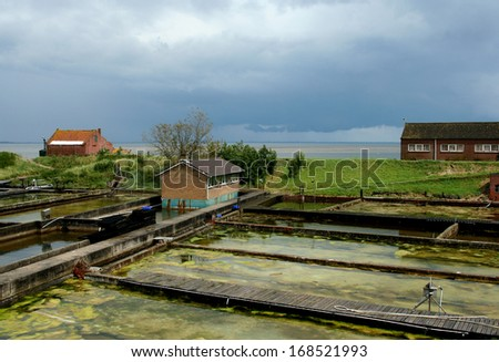 Oyster-culture in the old Dutch village of Yerseke - stock photo