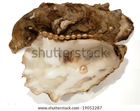 oyster shell with pearls isolated on white background, artistic shadows - stock photo
