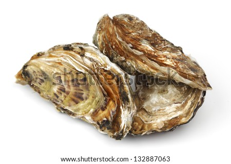 Oysters isolated on white background - stock photo