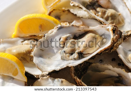 oysters plate - stock photo