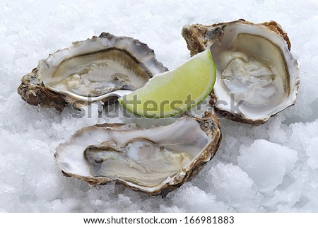 Oysters with lemon on ice  - stock photo