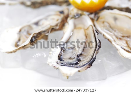 Oysters with lemon on white plate - stock photo