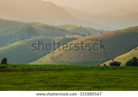 Pa Pong Pieng , Thailand Terraced Rice Field  - stock photo
