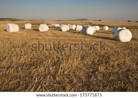 Packed hay rolls in white plastic on the meadow, Badajoz, Extremadrua, Spain - stock photo