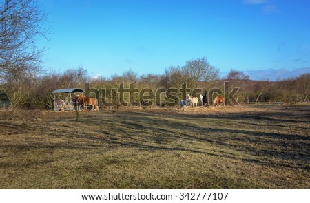 Paddock for horses in the open space. - stock photo