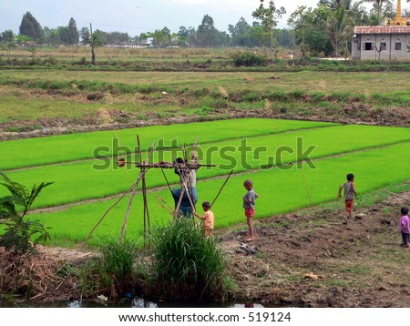 Paddy Farmer. Private Paddy Field near Inle Lake Myanmar (Burma) - stock photo