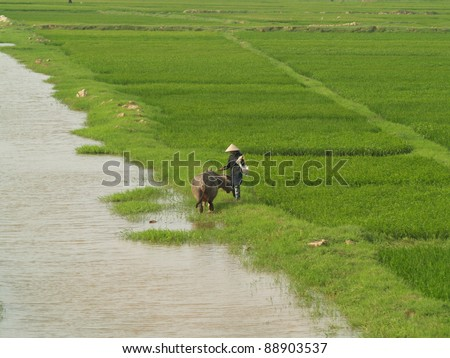 paddy field by the street in Vietnam - stock photo