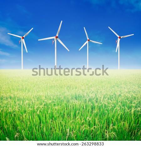 Paddy rice field. Wind turbines and blue sky. - stock photo