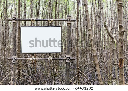 paint white in mangrove forest , - stock photo