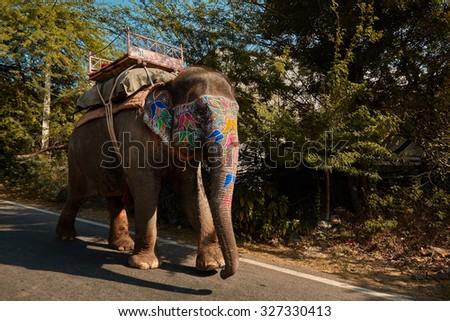 Painted elephant walking on road in Japiur city - stock photo