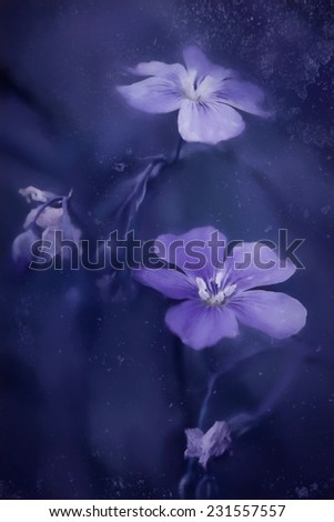 Painted flax flowers - stock photo