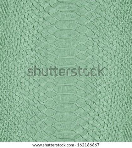 painted in light green snake skin  - stock photo