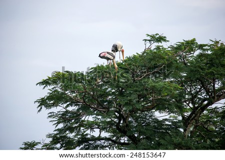 Painted storks on tree top - stock photo