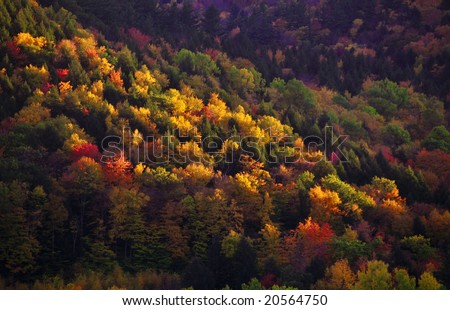 Painting like autumn colors on a hill slope - stock photo