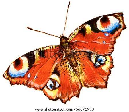 Painting of bright butterfly over white background - stock photo