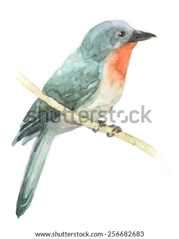 Painting with watercolor bird be freehand - stock photo
