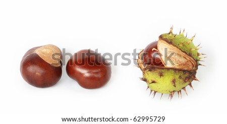 Pair of brown chestnuts and one chestnut in shell isolated on white background. Closeup details of single horse chestnut shell opened to display nut - stock photo