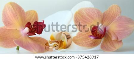 Pair of golden gorgeous amazing wedding rings jewelry traditional symbolic jewel on beautiful fresh pink and white orchidea background closeup panoramic image studio, horizontal pciture  - stock photo