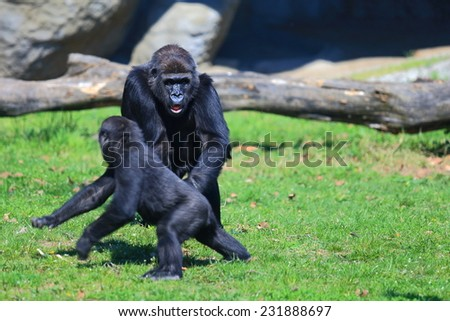 Pair of gorillas arguing on the grass - stock photo