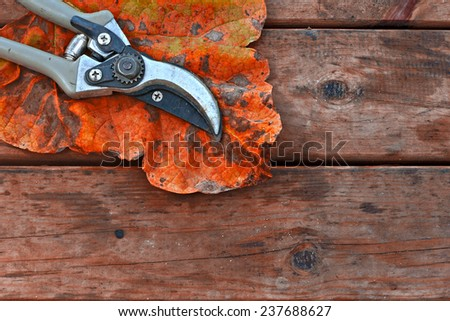 Pair of Secateurs and autumn leaf on rustic wooden table - stock photo