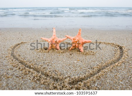 Pair of starfishes on the shore - stock photo