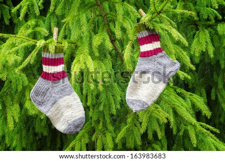 Pair of woolen socks hanging on fir in forest - stock photo