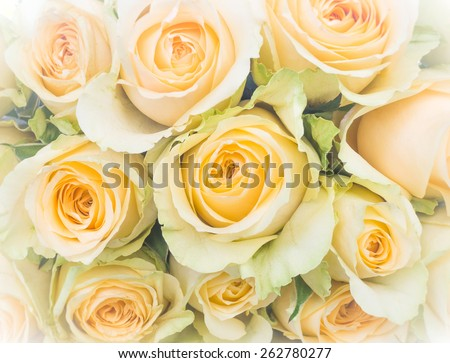 Pale white yellow rose bouquet (with vignette and iris blur) : Background for mothers day card : Happy mother's day - stock photo