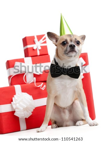 Pale yellow doggy in green fool's cap is near the presents, isolated on white - stock photo