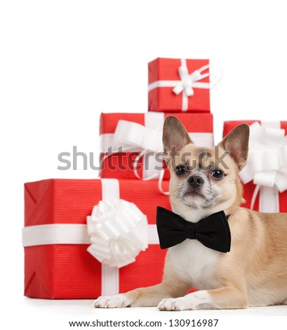 Pale yellow doggy lies near the Xmas presents, isolated on white - stock photo