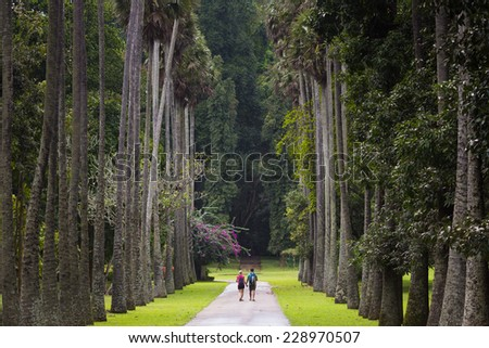 Palm alley in botanical garden Peradeniya. Kandy, Sri Lanka. - stock photo