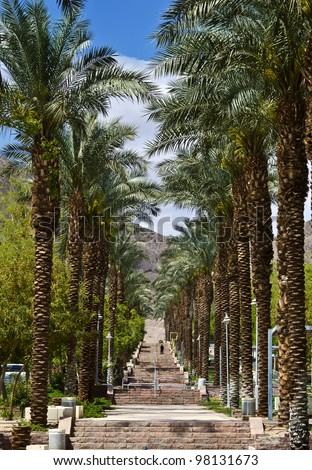 Palm alley in Eilat - famous resort and recreation city in Israel - stock photo