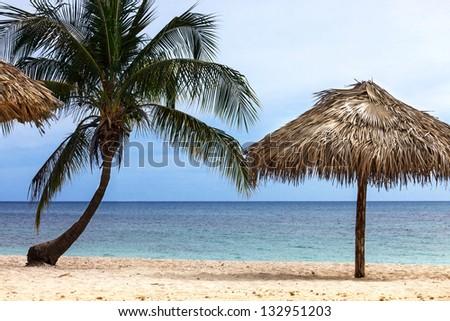 palm and beach umbrella on the sandy beach - stock photo