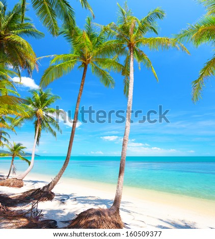 Palm and tropical beach - stock photo