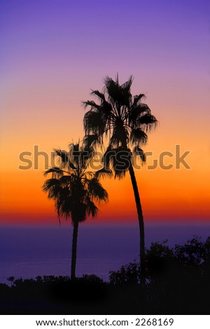 Palm at sunset - at the beach - stock photo