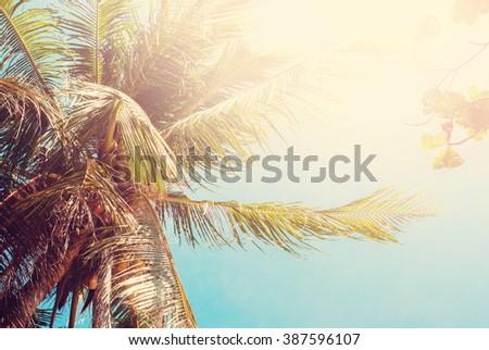 Palm Coconut Tree Thailand Heat Tropical Landscape Holiday Travel Background Effect Toned Sunlight - stock photo