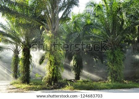 Palm Day Outdoor Fog Light Farm - stock photo