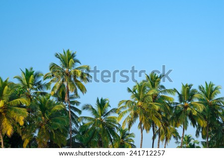palm forest - stock photo