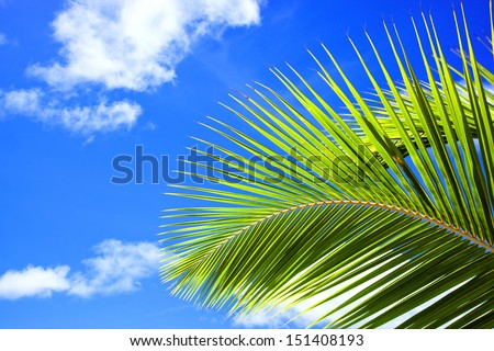 palm frond against blue sky - stock photo
