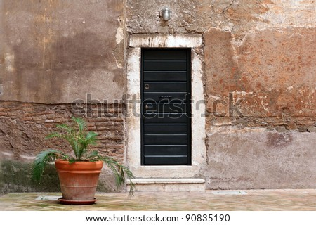 palm in pot with an old rural wall and door - stock photo