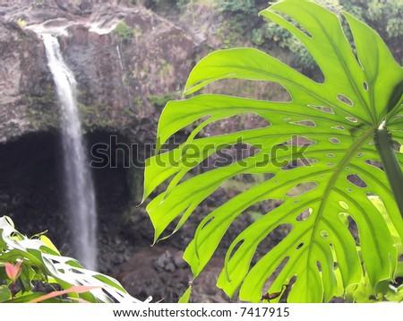 palm leaf and rainbow falls - hilo, hawaii - stock photo