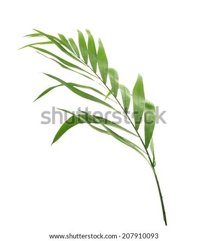 palm leaf , isolated on white background - stock photo